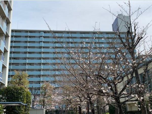 中古マンション 江東区越中島3丁目 JR京葉線越中島駅 3880万円