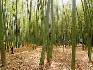 東久留米市 竹林公園